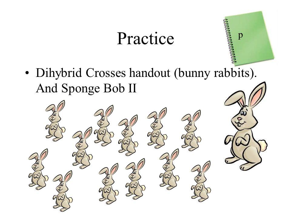 Practice Dihybrid Crosses handout (bunny rabbits). And Sponge Bob II p