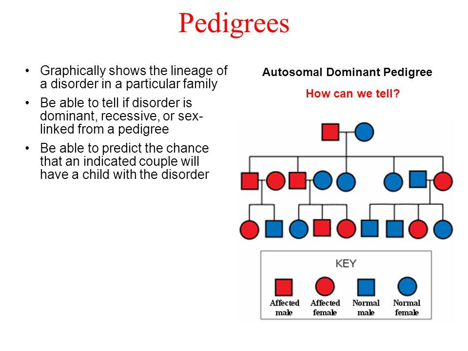 Pedigrees Autosomal Dominant Pedigree How can we tell.