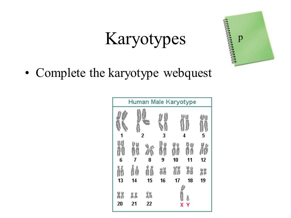 Karyotypes Complete the karyotype webquest p