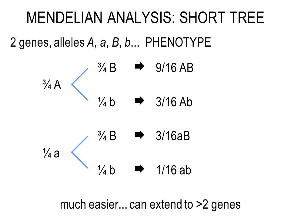 MENDELIAN ANALYSIS: SHORT TREE 2 genes, alleles A, a, B, b...