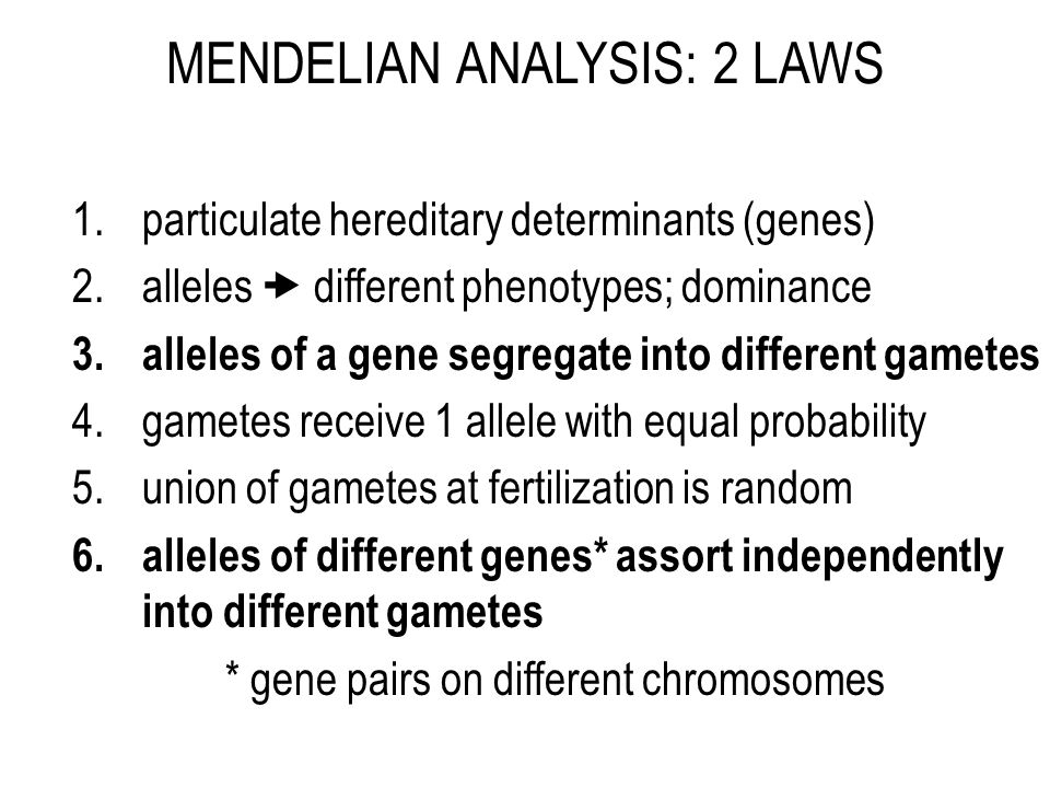 MENDELIAN ANALYSIS: 2 LAWS 1.particulate hereditary determinants (genes) 2.alleles  different phenotypes; dominance 3.alleles of a gene segregate into different gametes 4.gametes receive 1 allele with equal probability 5.union of gametes at fertilization is random 6.