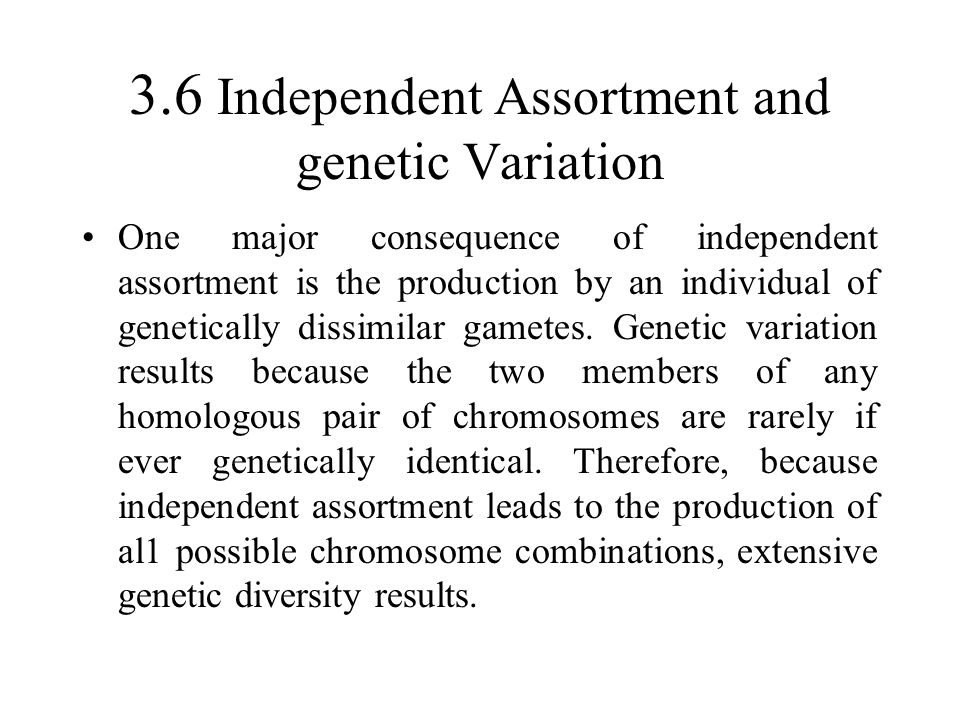 3.6 Independent Assortment and genetic Variation One major consequence of independent assortment is the production by an individual of genetically dissimilar gametes.