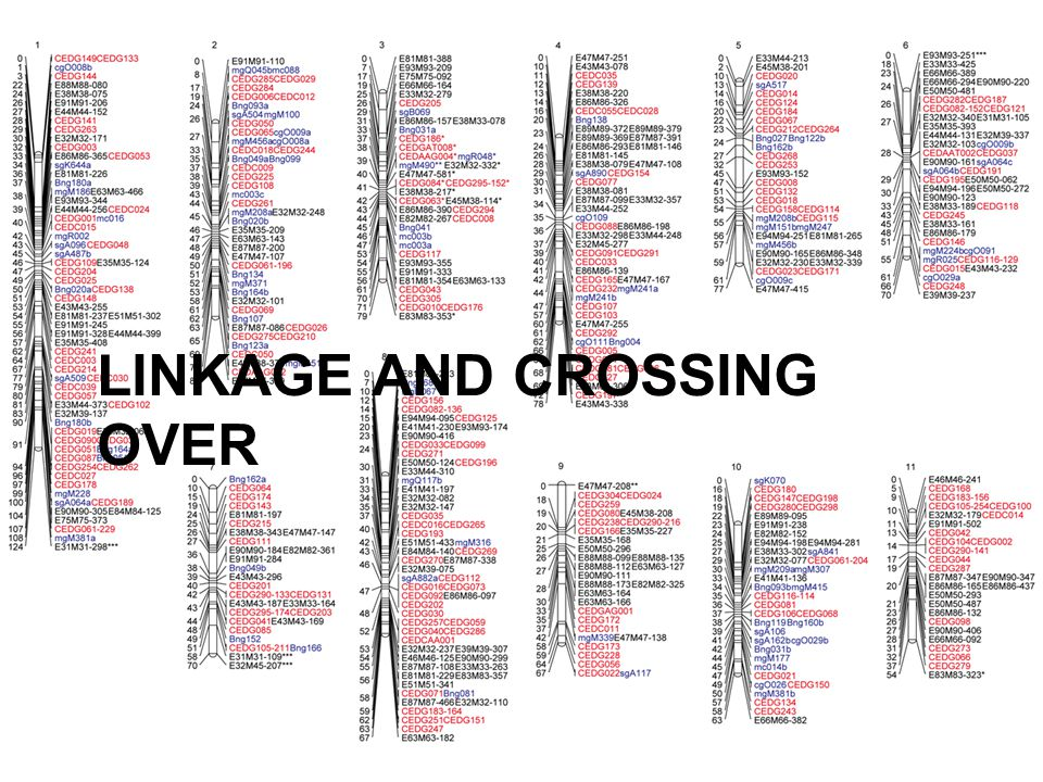 LINKAGE AND CROSSING OVER