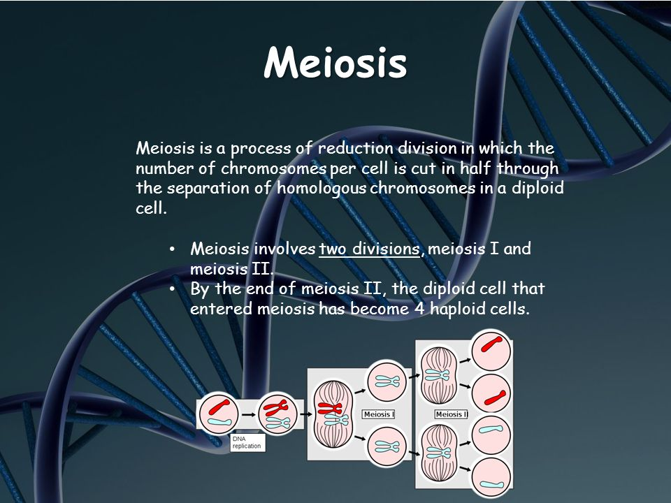 Meiosis Meiosis is a process of reduction division in which the number of chromosomes per cell is cut in half through the separation of homologous chr