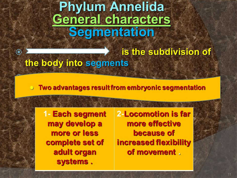 is the subdivision of the body into segments  is the subdivision of the body into segments   Two advantages result from embryonic segmentation Each