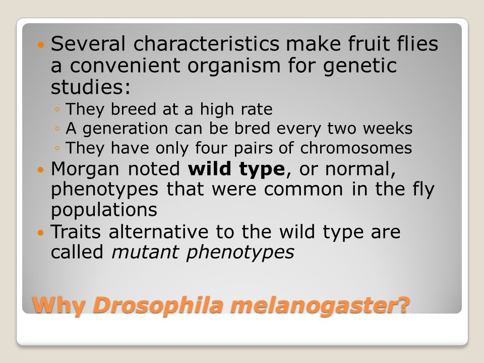 Why Drosophila melanogaster? Several characteristics make fruit flies a convenient organism for genetic studies: ◦They breed at a high rate ◦A generat