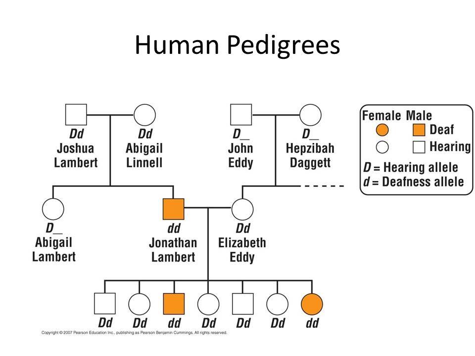 Human Pedigrees