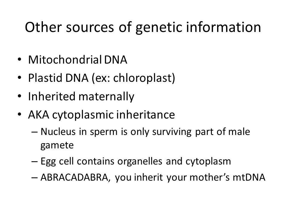 Other sources of genetic information Mitochondrial DNA Plastid DNA (ex: chloroplast) Inherited maternally AKA cytoplasmic inheritance – Nucleus in sperm is only surviving part of male gamete – Egg cell contains organelles and cytoplasm – ABRACADABRA, you inherit your mother's mtDNA