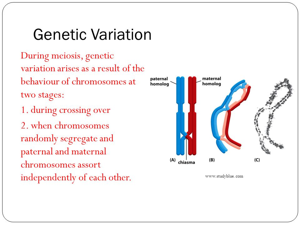 Genetic Variation During meiosis, genetic variation arises as a result of the behaviour of chromosomes at two stages: 1.