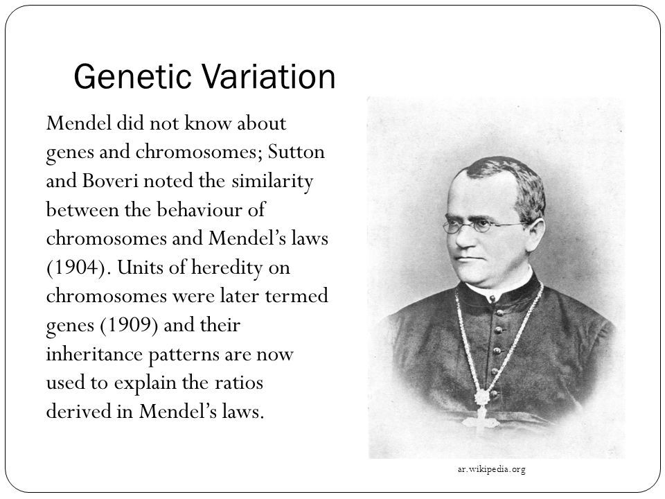 Genetic Variation Mendel did not know about genes and chromosomes; Sutton and Boveri noted the similarity between the behaviour of chromosomes and Mendel's laws (1904).