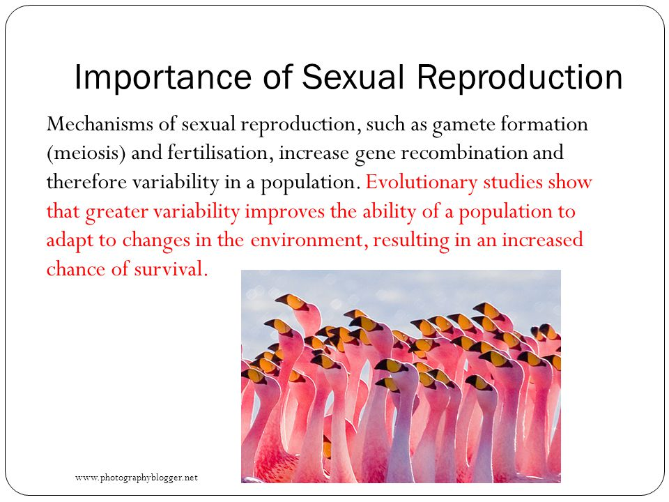 Importance of Sexual Reproduction Mechanisms of sexual reproduction, such as gamete formation (meiosis) and fertilisation, increase gene recombination and therefore variability in a population.