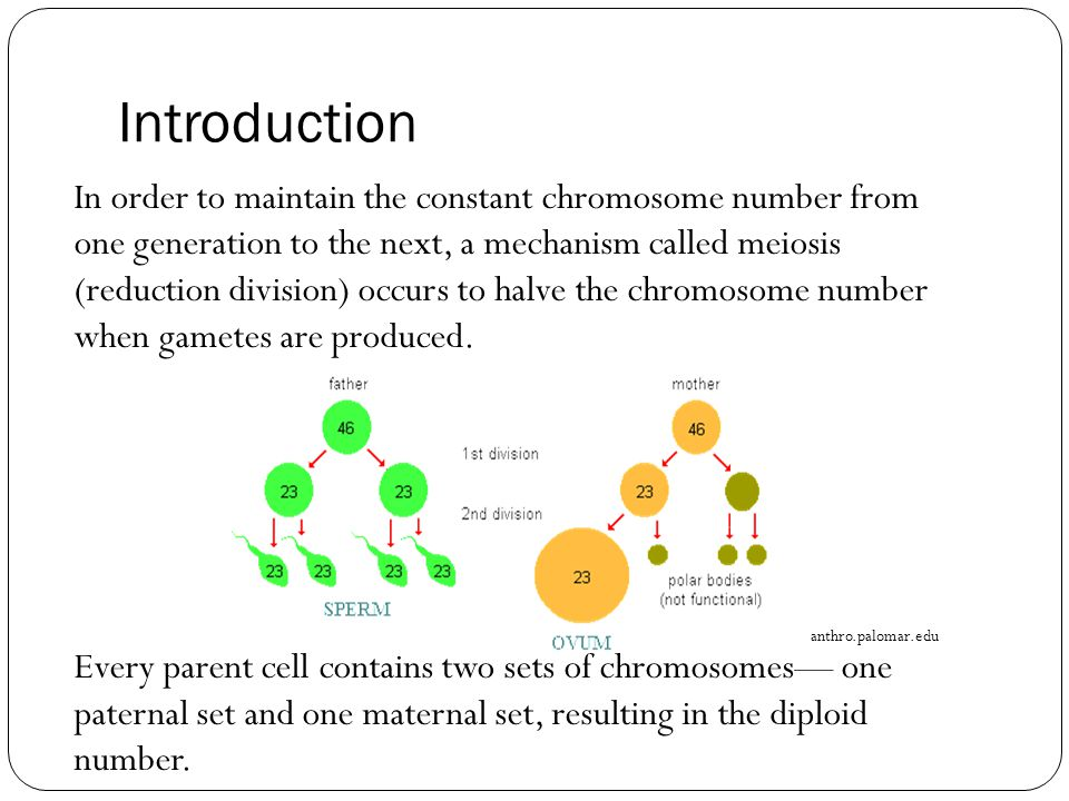 Genetic Variation During meiosis I: The exchange of genetic material between homologous chromosomes during crossing over causes the mixing of paternal and maternal genes and the result is an increased number of combinations of genes that may be transmitted by gametes to offspring, thereby increasing genetic variation.