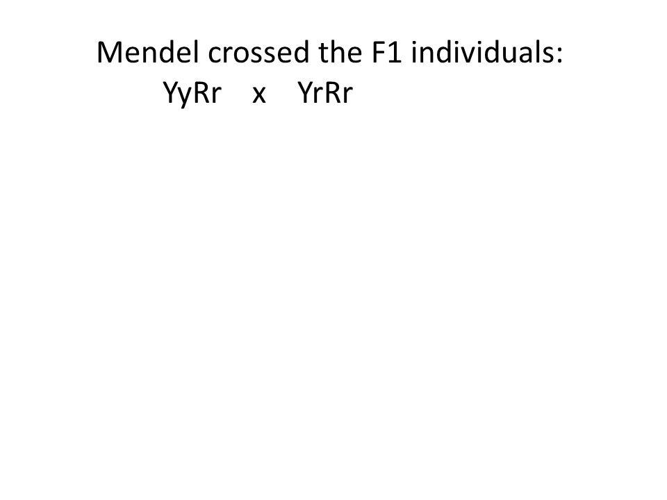 Mendel crossed the F1 individuals: YyRr x YrRr