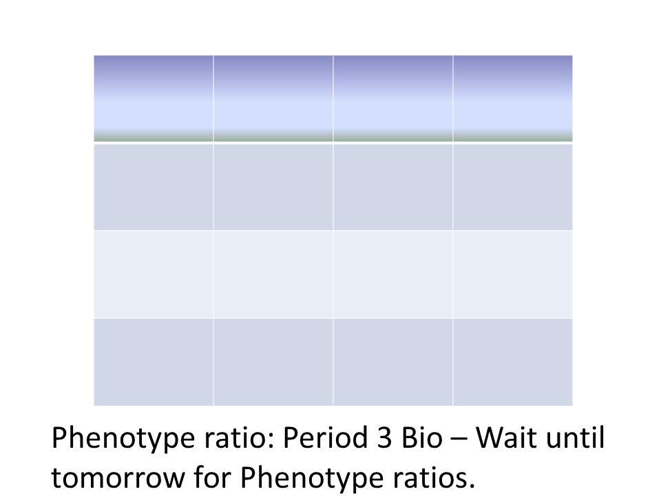 Phenotype ratio: Period 3 Bio – Wait until tomorrow for Phenotype ratios.