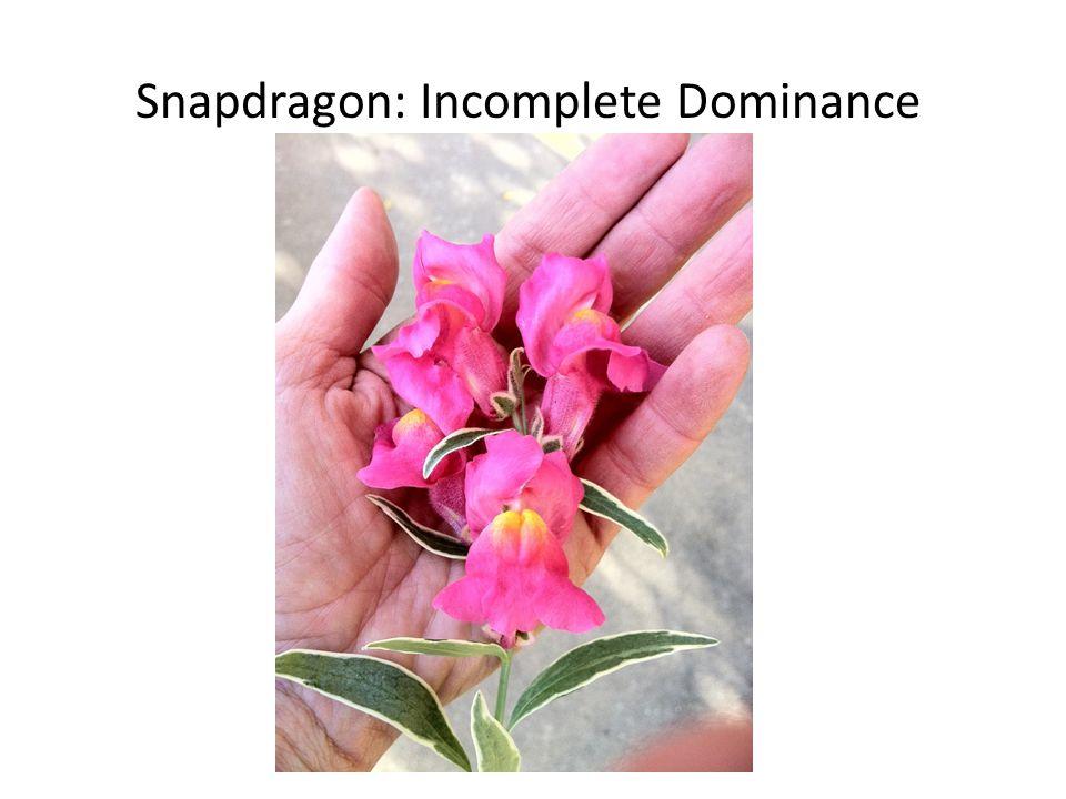 Snapdragon: Incomplete Dominance