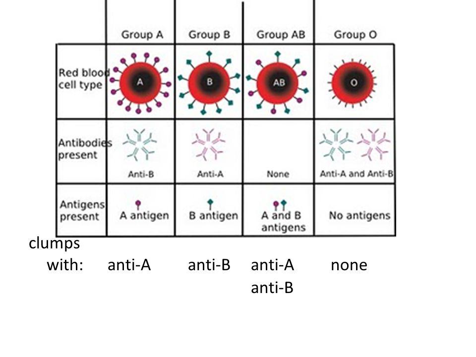 clumps with: anti-A anti-B anti-A none anti-B