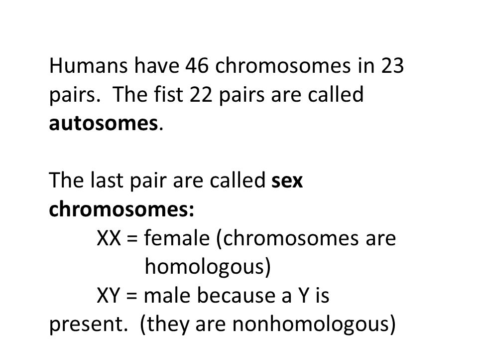 Humans have 46 chromosomes in 23 pairs. The fist 22 pairs are called autosomes. The last pair are called sex chromosomes: XX = female (chromosomes are