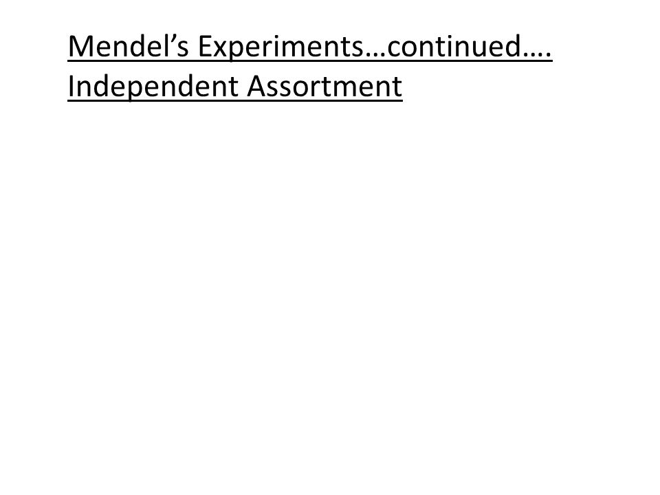 Mendel crossed the F1 individuals: YyRr x YyRr Poss. YR, Yr, yR, yrYR, Yr, yR, yr Gam.