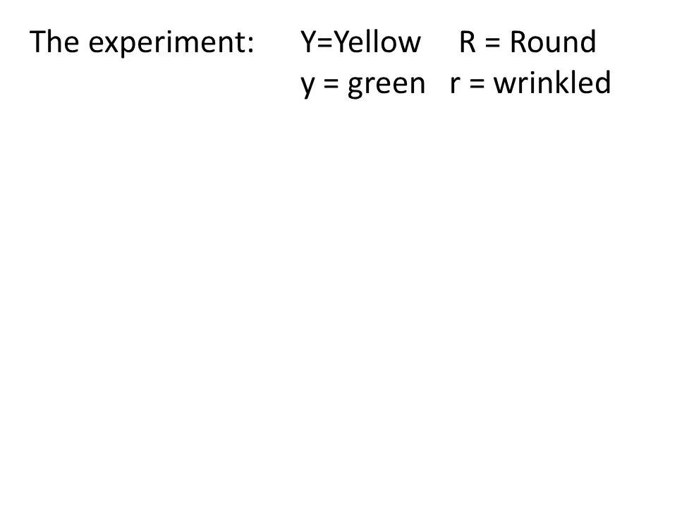 The experiment:Y=Yellow R = Round y = green r = wrinkled Parents:true breeding for both traits YYRR x yyrr