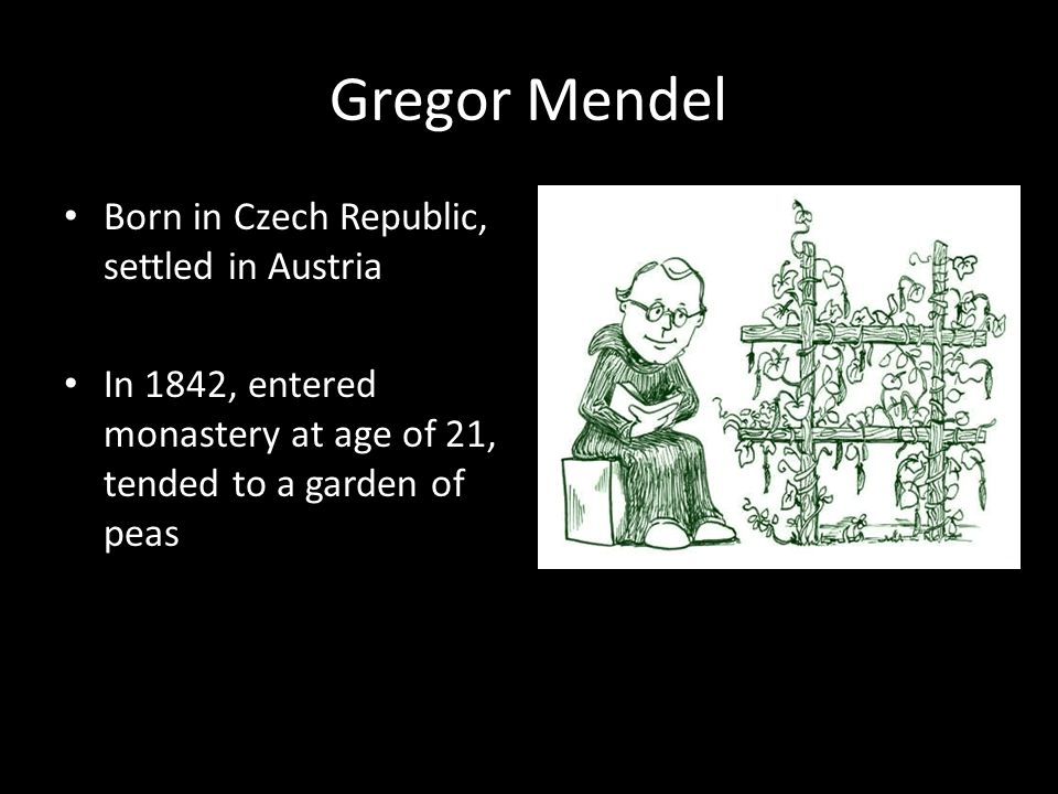 Gregor Mendel Born in Czech Republic, settled in Austria In 1842, entered monastery at age of 21, tended to a garden of peas
