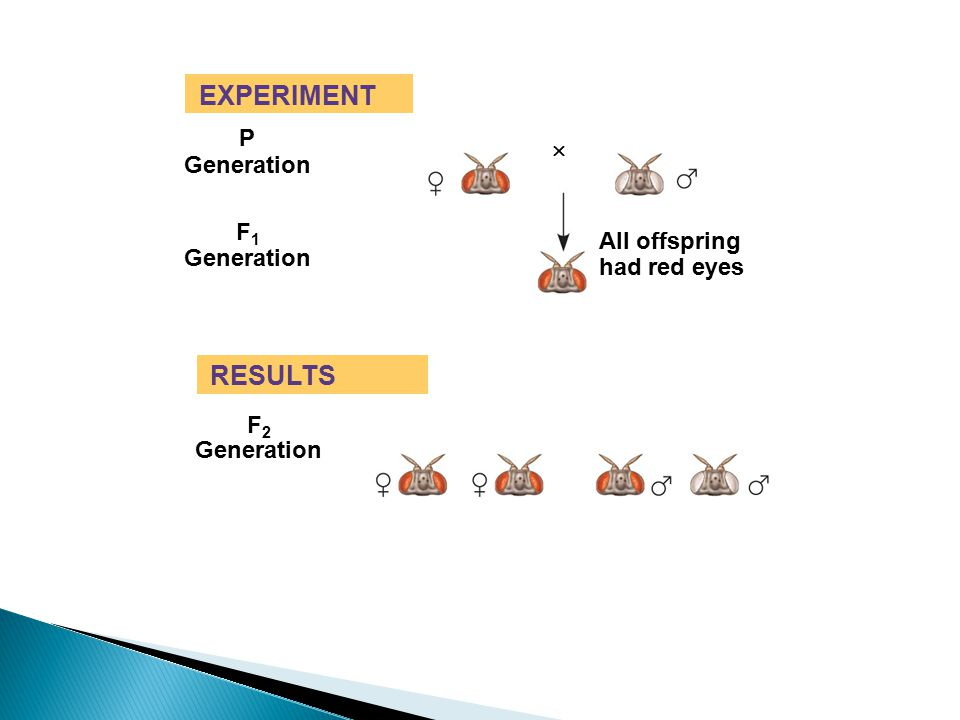 EXPERIMENT P Generation F1F1 All offspring had red eyes  Fig. 15-4b RESULTS Generation F2F2