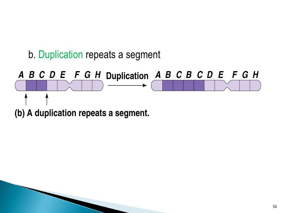 b. Duplication repeats a segment 54
