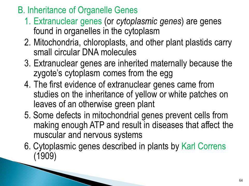B. Inheritance of Organelle Genes 1.Extranuclear genes (or cytoplasmic genes ) are genes found in organelles in the cytoplasm 2.Mitochondria, chloropl