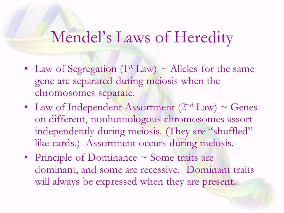 Mendel's Laws of Heredity Law of Segregation (1 st Law) ~ Alleles for the same gene are separated during meiosis when the chromosomes separate.