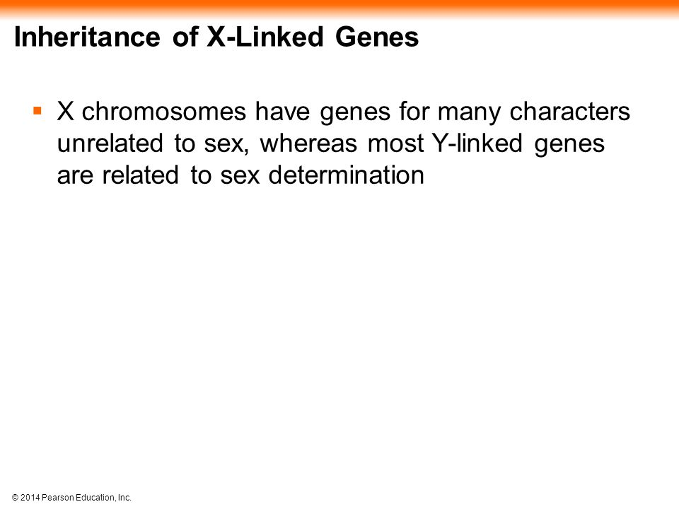 © 2014 Pearson Education, Inc. Inheritance of X-Linked Genes  X chromosomes have genes for many characters unrelated to sex, whereas most Y-linked ge