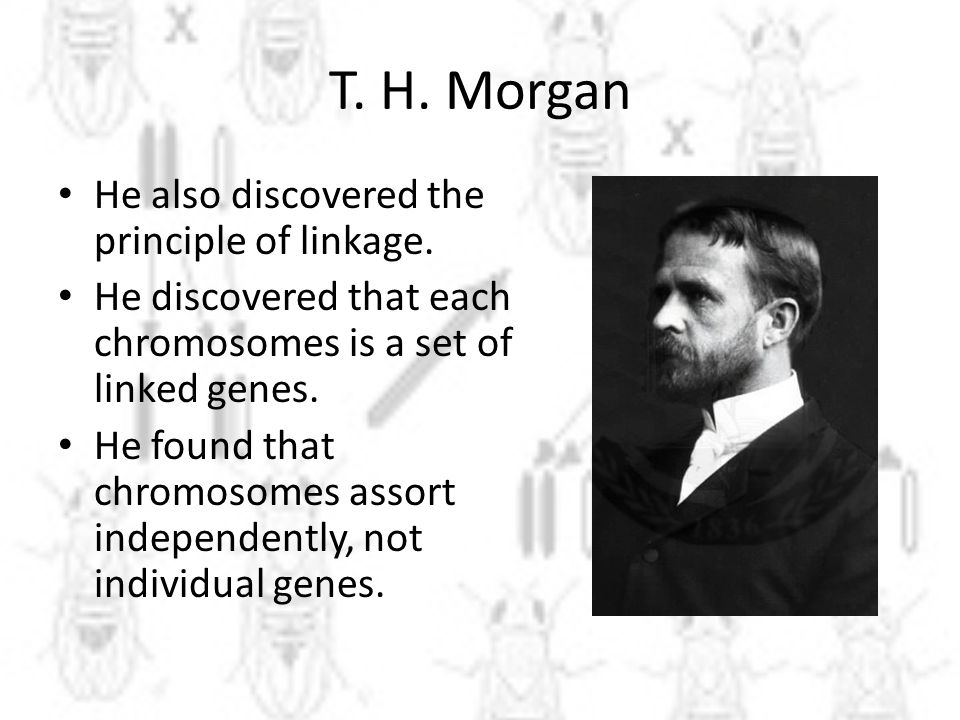 T.H. Morgan He also discovered the principle of linkage.