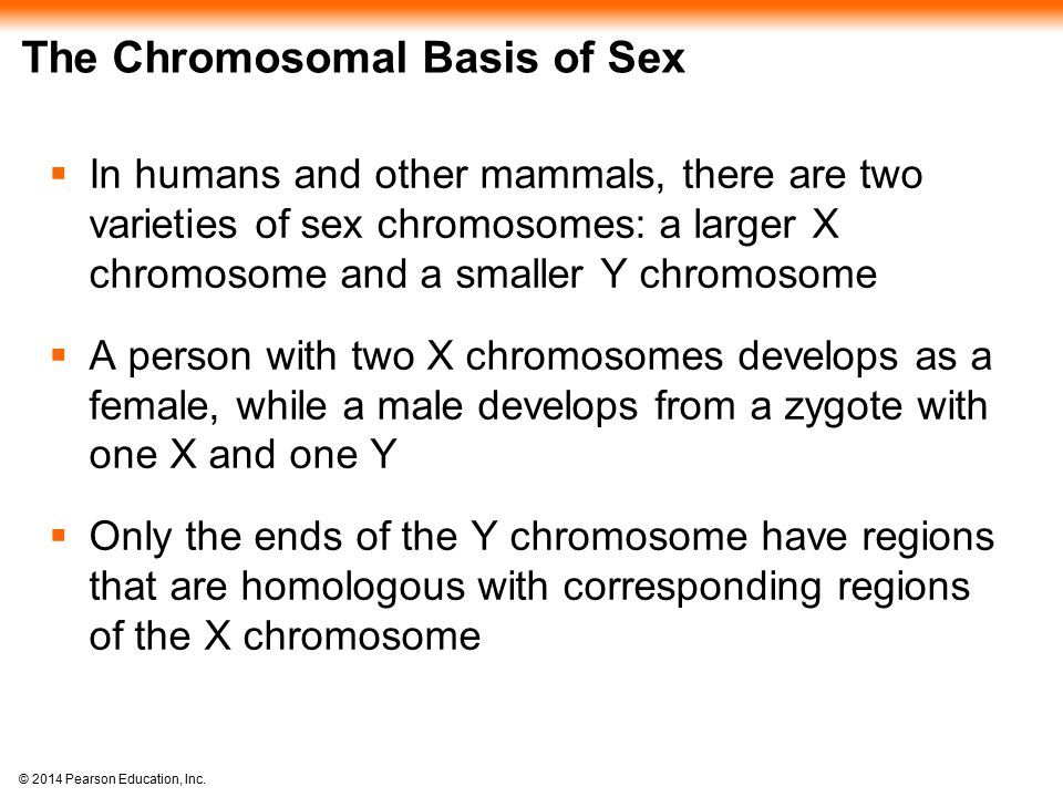 © 2014 Pearson Education, Inc. The Chromosomal Basis of Sex  In humans and other mammals, there are two varieties of sex chromosomes: a larger X chro
