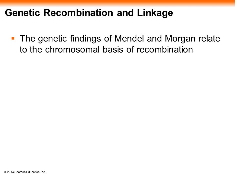 © 2014 Pearson Education, Inc. Genetic Recombination and Linkage  The genetic findings of Mendel and Morgan relate to the chromosomal basis of recomb