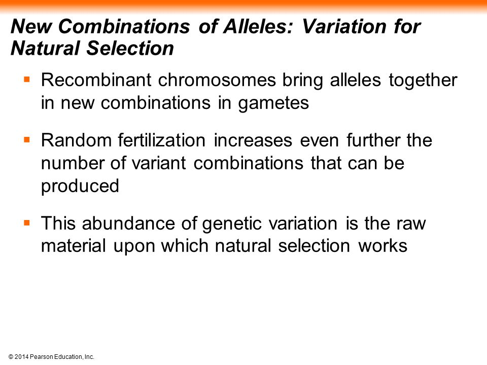 © 2014 Pearson Education, Inc. New Combinations of Alleles: Variation for Natural Selection  Recombinant chromosomes bring alleles together in new co