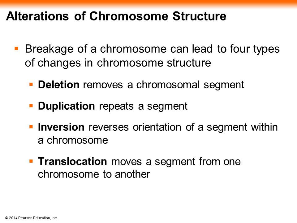 © 2014 Pearson Education, Inc. Alterations of Chromosome Structure  Breakage of a chromosome can lead to four types of changes in chromosome structur