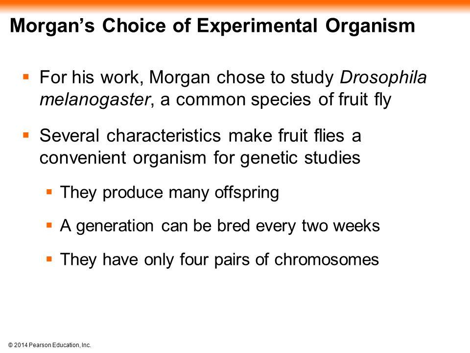 © 2014 Pearson Education, Inc.Figure 15.17 Normal Igf2 allele is expressed.