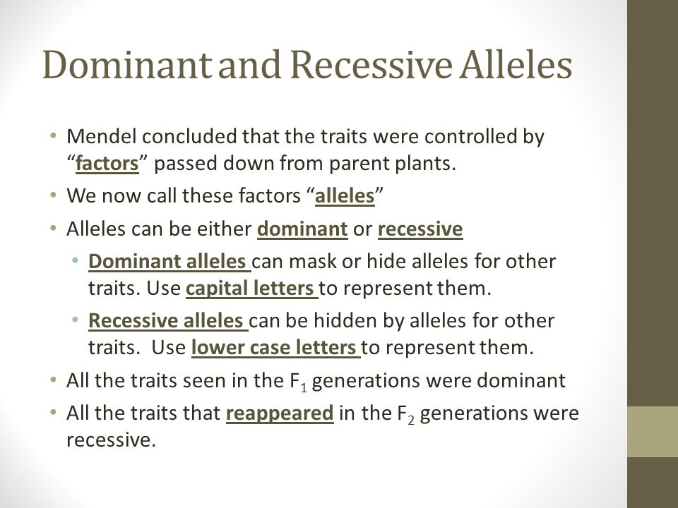 """Dominant and Recessive Alleles Mendel concluded that the traits were controlled by """"factors"""" passed down from parent plants. We now call these factors"""