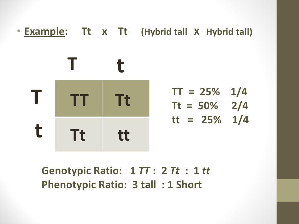 Example: Tt x Tt (Hybrid tall X Hybrid tall) T t T t TT = 25% 1/4 Tt = 50% 2/4 tt = 25% 1/4 Genotypic Ratio: 1 TT : 2 Tt : 1 tt Phenotypic Ratio: 3 ta