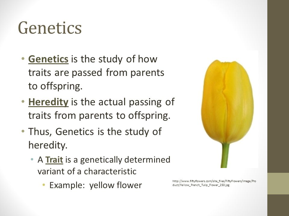 Genetics Genetics is the study of how traits are passed from parents to offspring. Heredity is the actual passing of traits from parents to offspring.