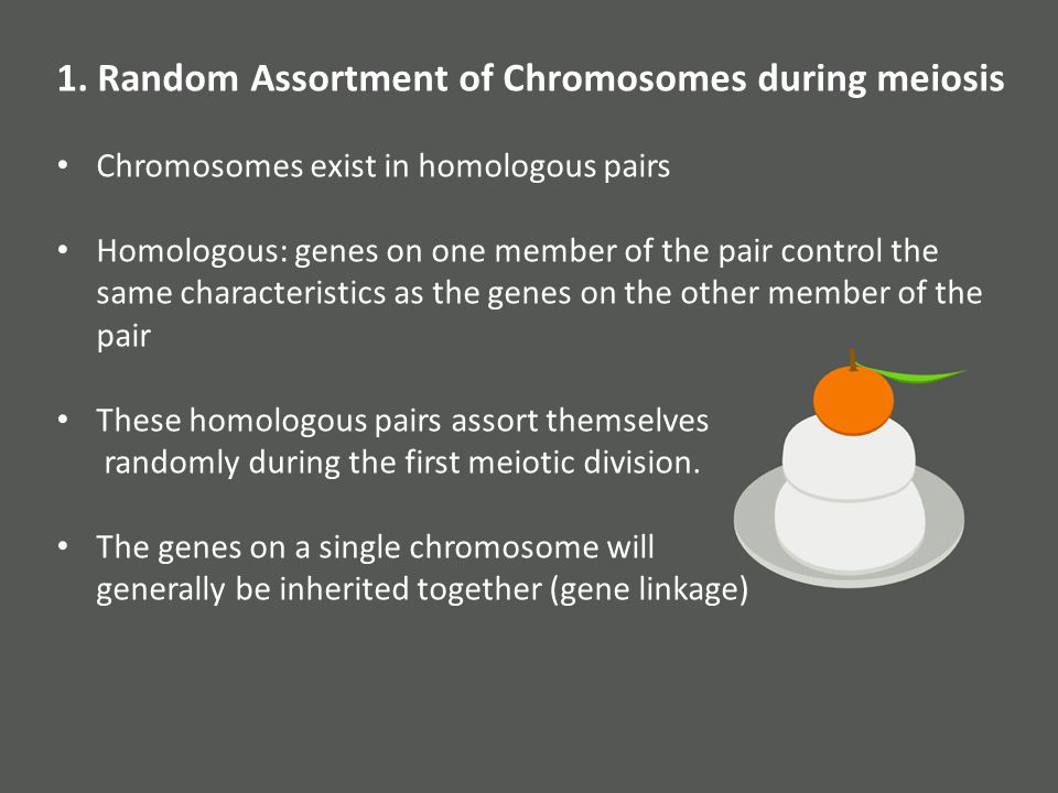 1. Random Assortment of Chromosomes during meiosis Chromosomes exist in homologous pairs Homologous: genes on one member of the pair control the same