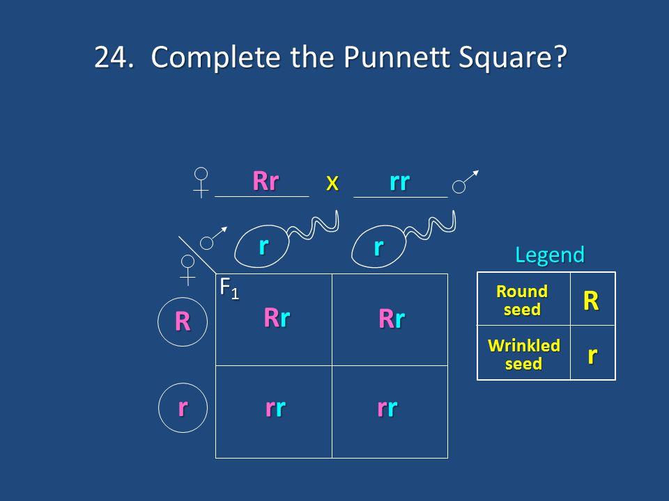 24. Complete the Punnett Square? r r R r R Round seed Wrinkled seed rLegend RrRrRrRr RrRrRrRr rrrrrrrr rrrrrrrr F1F1F1F1 x Rr rr