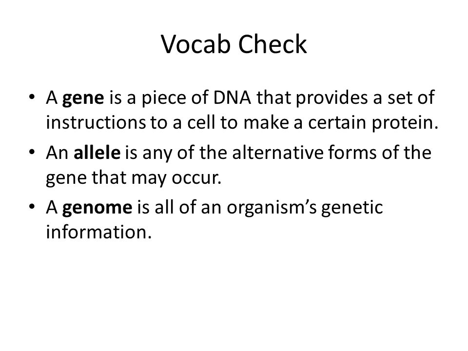 Vocab Check A gene is a piece of DNA that provides a set of instructions to a cell to make a certain protein.