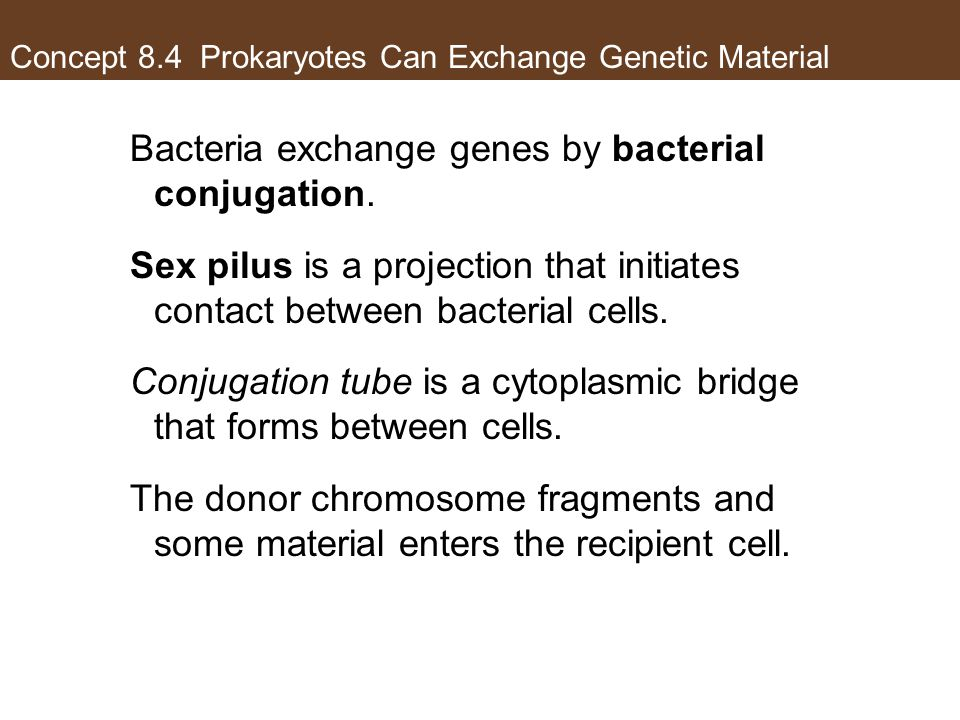 Concept 8.4 Prokaryotes Can Exchange Genetic Material Bacteria exchange genes by bacterial conjugation. Sex pilus is a projection that initiates conta