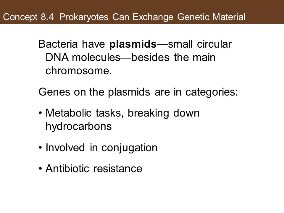 Concept 8.4 Prokaryotes Can Exchange Genetic Material Bacteria have plasmids—small circular DNA molecules—besides the main chromosome. Genes on the pl