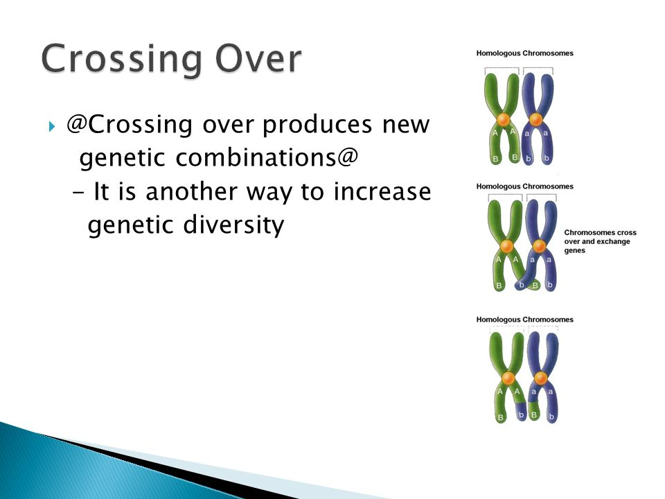  @Crossing over produces new genetic combinations@ - It is another way to increase genetic diversity