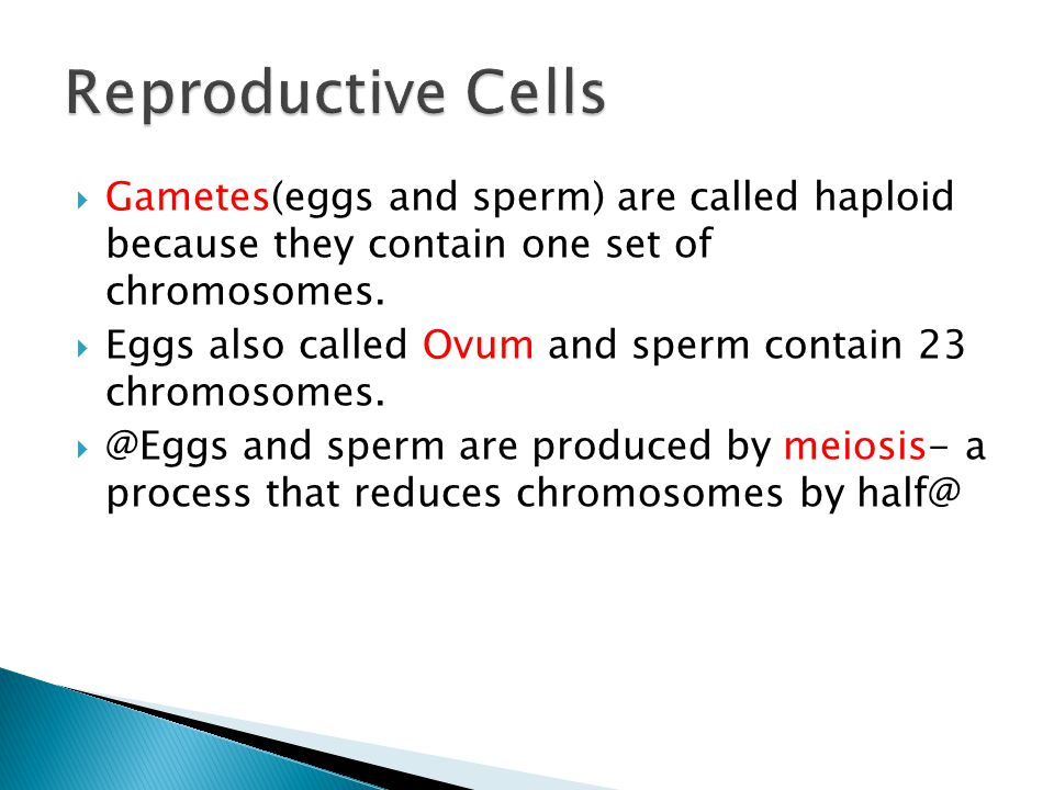  Mitosis creates 2 daughter cells with same amount of chromosomes  Meiosis creates 4 daughter cells with half amount of chromosomes  Meiosis goes through 2 cycles  Mitosis occurs in somatic cells, Meiosis in sex cells