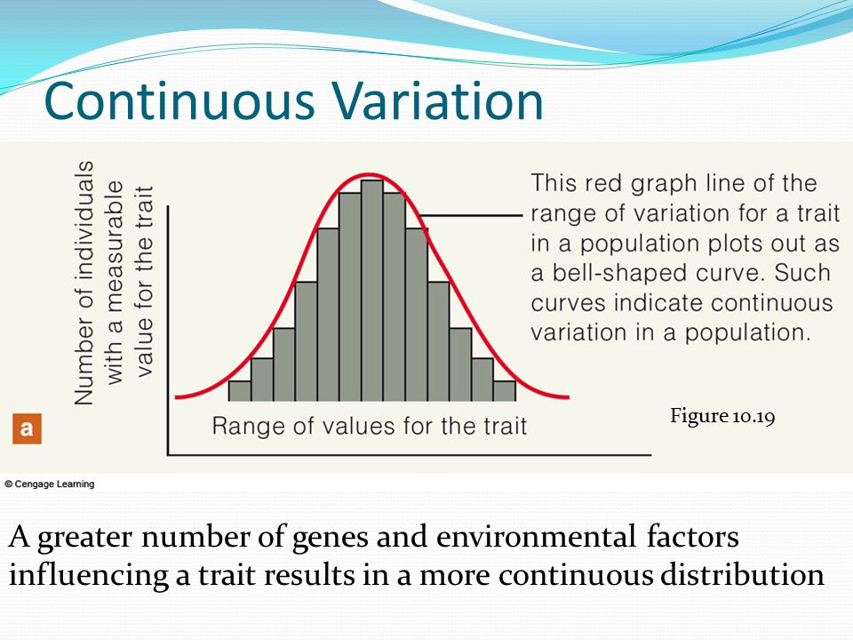 Continuous Variation Figure 10.19 A greater number of genes and environmental factors influencing a trait results in a more continuous distribution