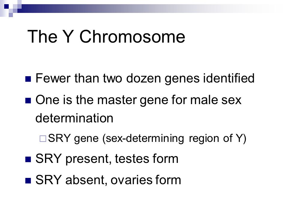 The Y Chromosome Fewer than two dozen genes identified One is the master gene for male sex determination  SRY gene (sex-determining region of Y) SRY