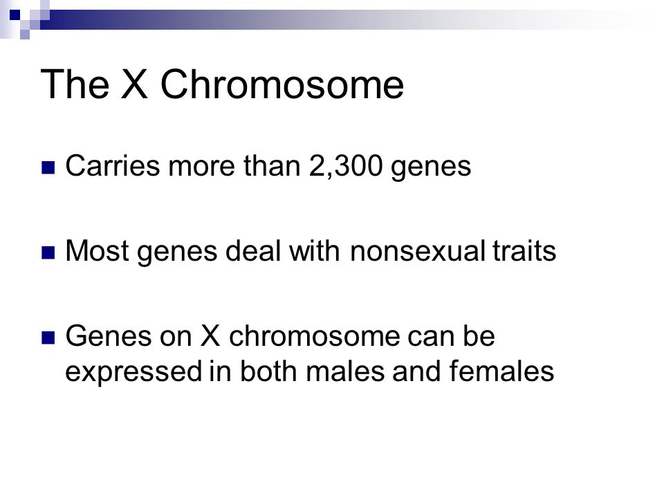The X Chromosome Carries more than 2,300 genes Most genes deal with nonsexual traits Genes on X chromosome can be expressed in both males and females