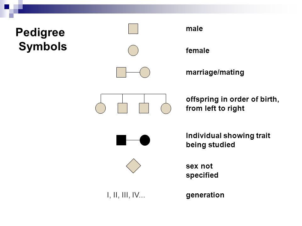 Pedigree Symbols male female marriage/mating Individual showing trait being studied sex not specified generation I, II, III, IV... offspring in order