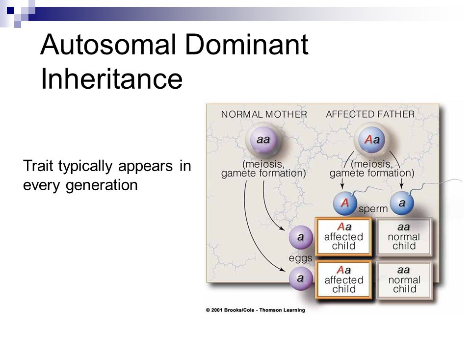 Autosomal Dominant Inheritance Trait typically appears in every generation